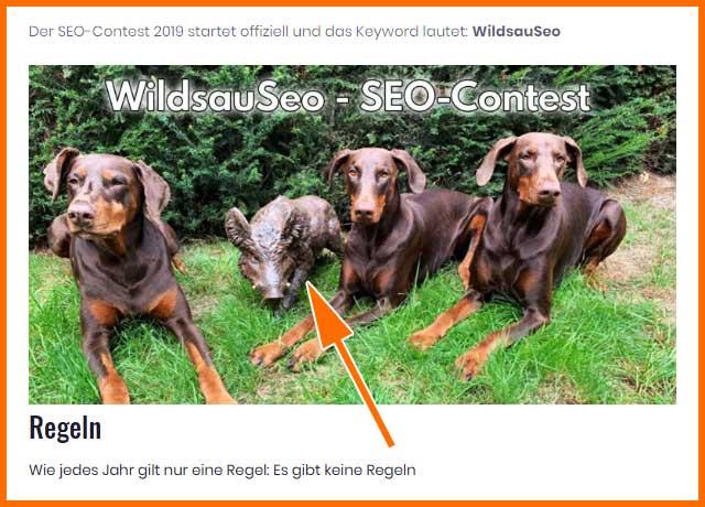 Wildsauseo Seo-Contest (keine Regeln!)