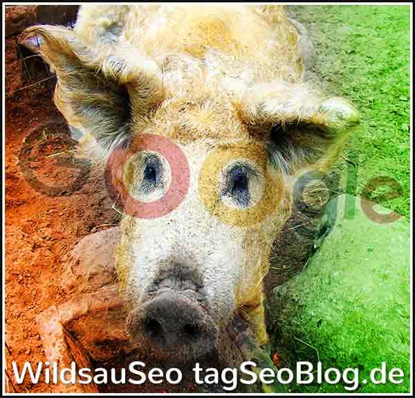 wildsauseo bild